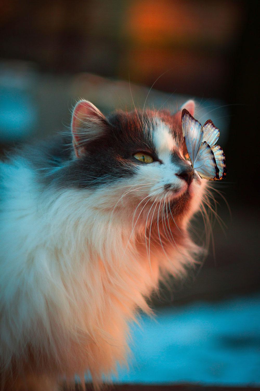 Photo by Karina Vorozheeva
