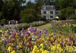 Montclair New Jersey's Presby Iris Garden
