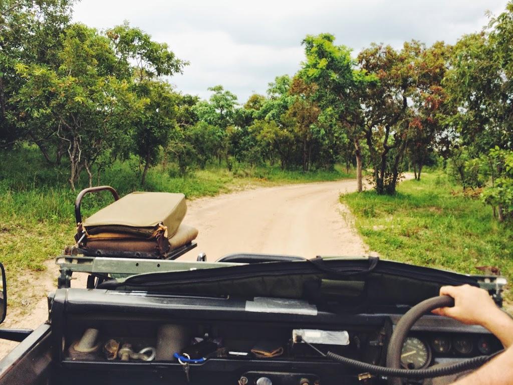 safari #1: NSELE