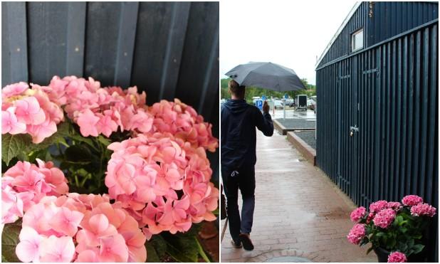 rainy day in denmark1