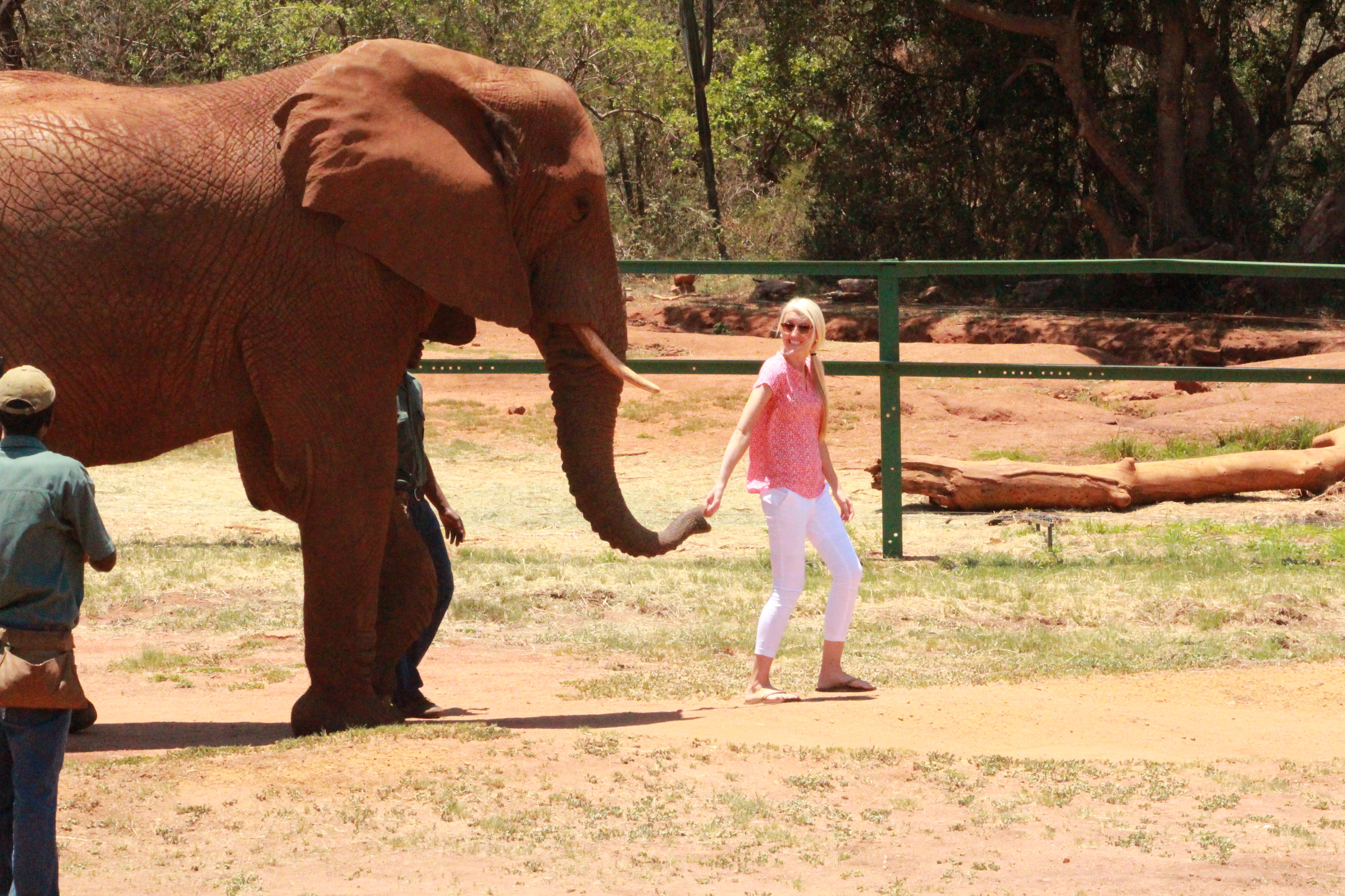 elephant + monkey sanctuary
