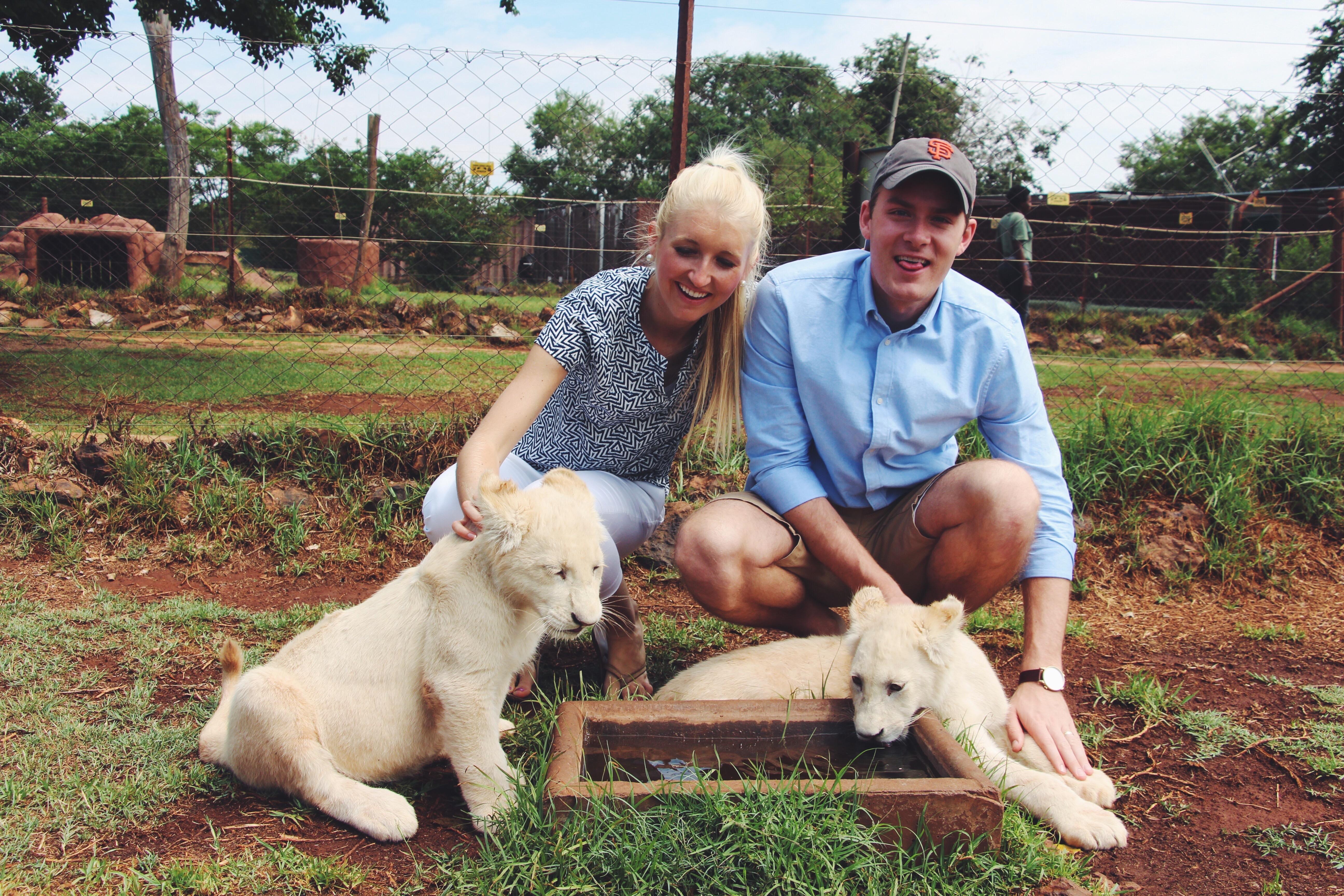 lion park, south africa