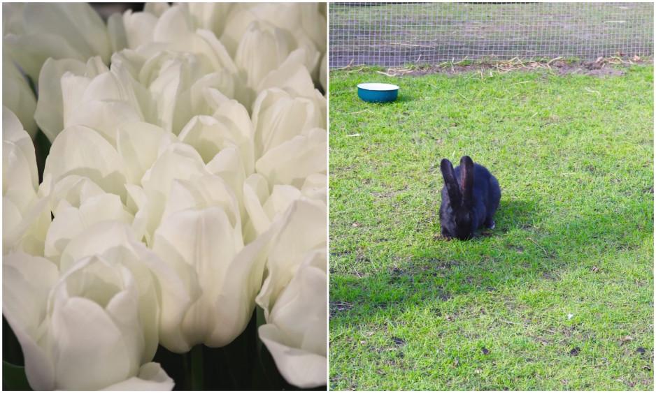 Easter at Keukenhof Tulip Festival5