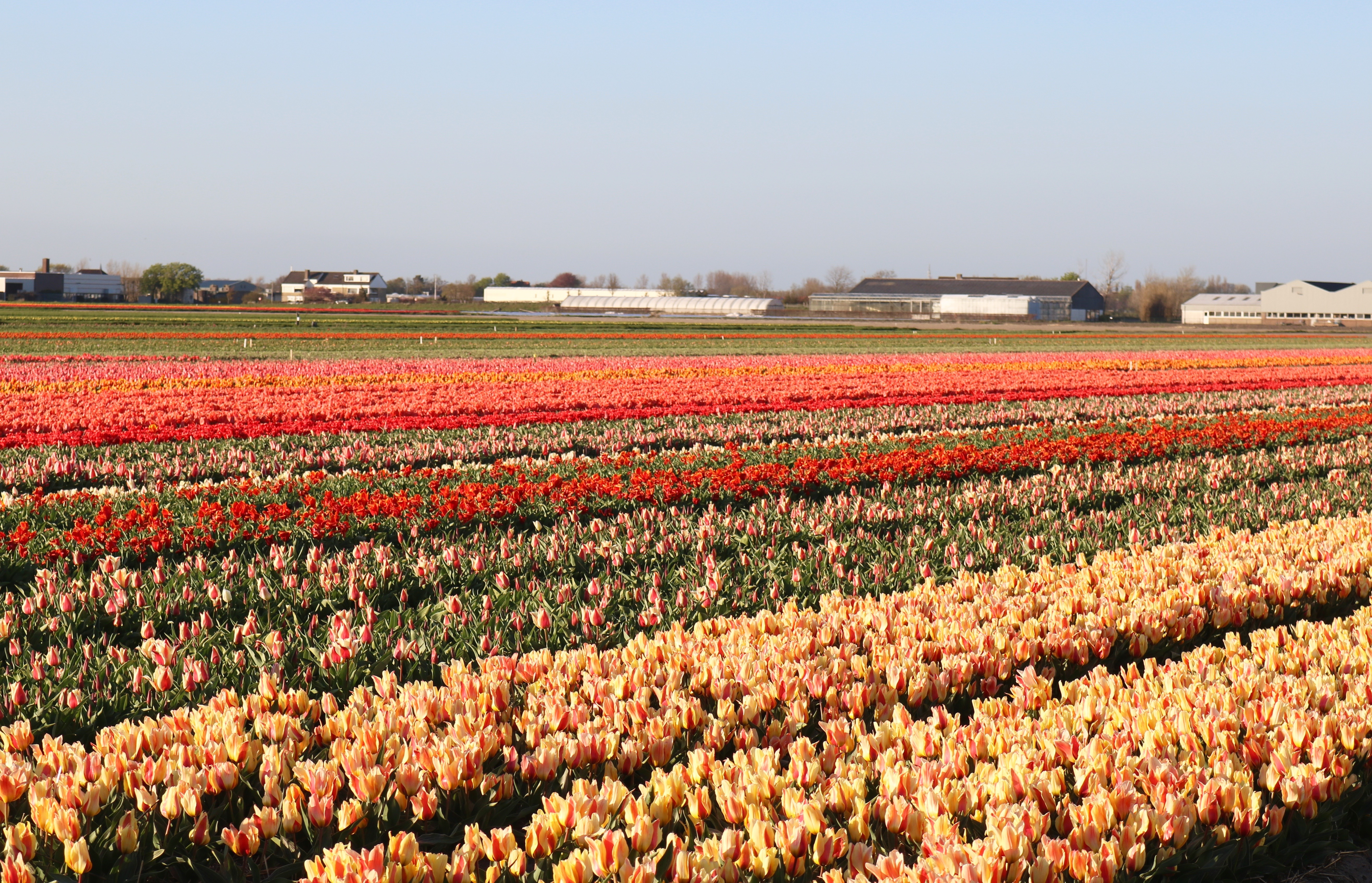 Goodbye Netherlands, Hello U.S.A.!