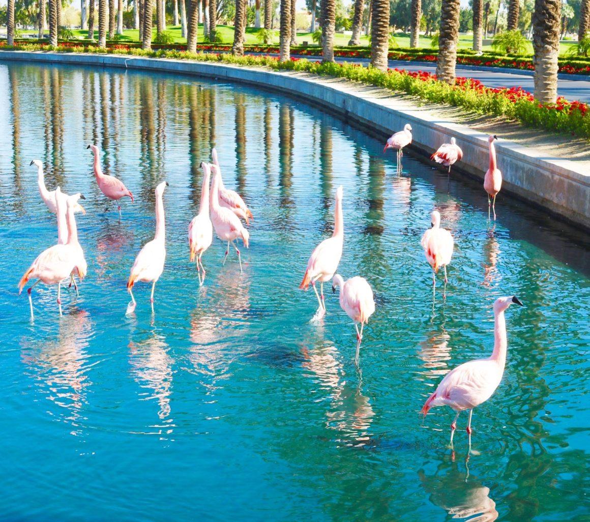 Pretty Palm Springs