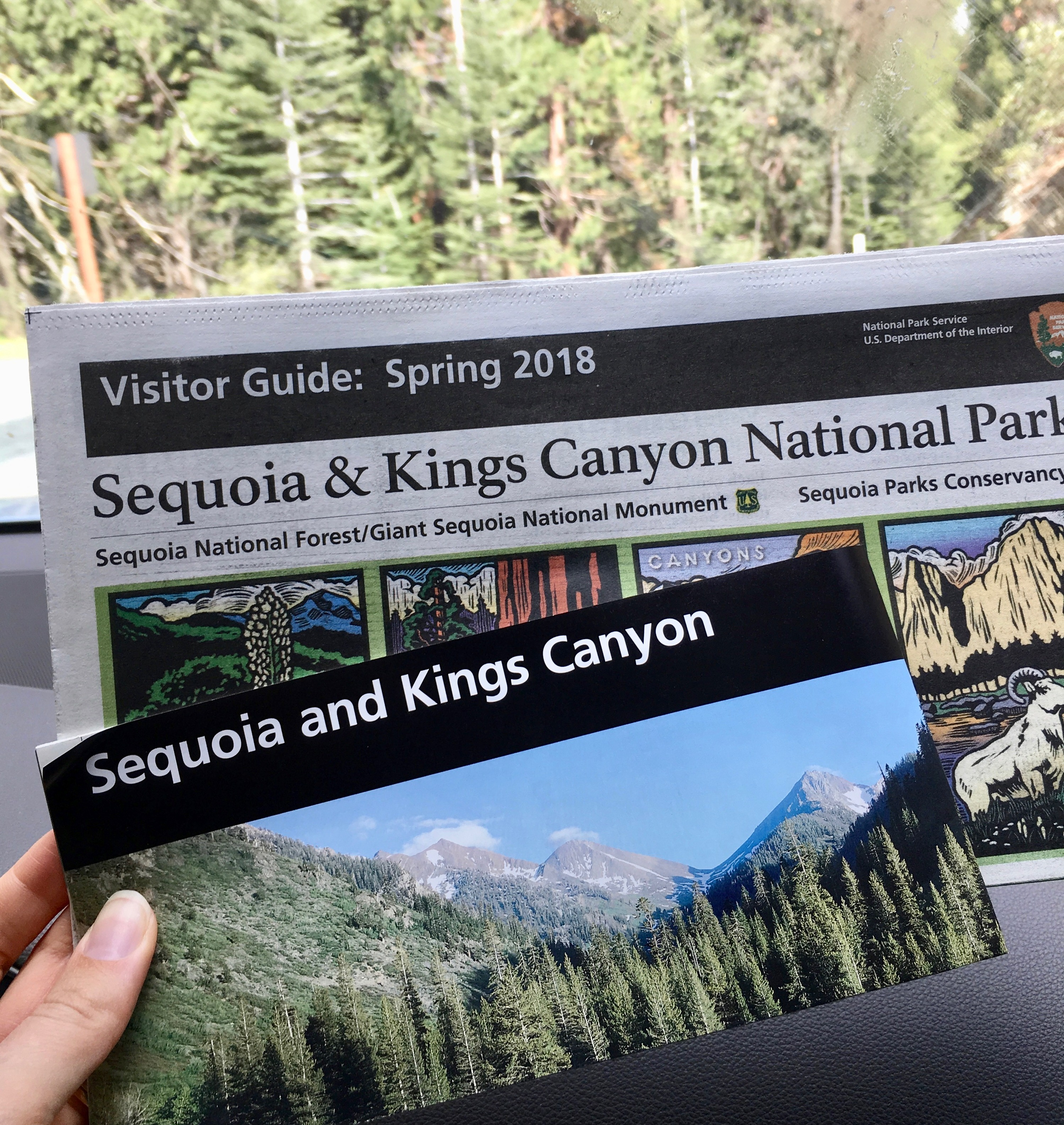 Sequoia National Park!