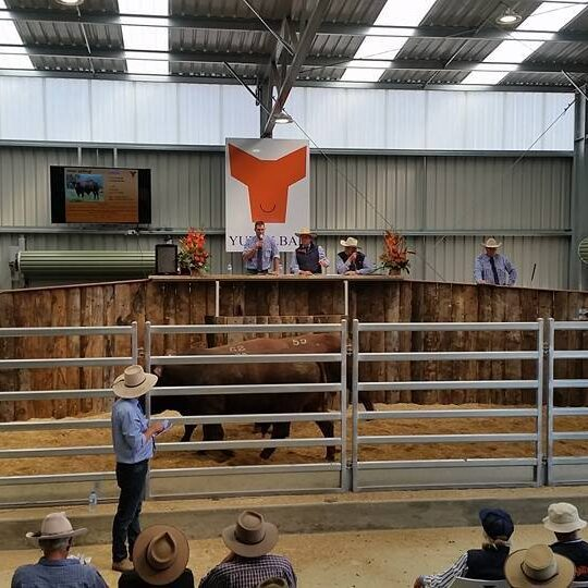 Annual Production Sale 2017