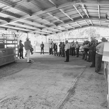 Bill Hoffman Beef Day April 2017 - Yulgilbar Station