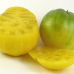 Picture: Tomato Dwarf Lemon Ice (photo courtesy of Heritage Seeds)