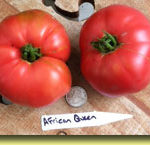 Pictre Tomato African Queen