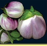 Picture: Eggplant Rosa Bianca