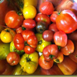 Picture: Tomato Grouping