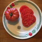 Picture Tomato Sibirsky #2 (courtesy John and Liz)