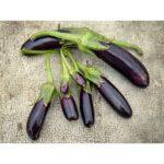Eggplant Little Fingers (courtesy Baker Creek)