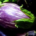 Eggplant Shooting Stars (courtesy Bunny Hop Seeds)