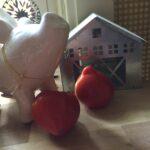 Picture Tomato Dwarf Scarlet Heart #2