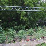 New garden july 2020 #2 (3)