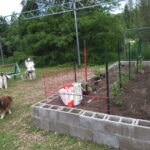 New garden just planted and singing for joy June 2020