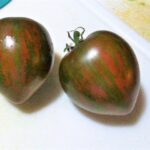 Tomato Black and Brown Boar from customer Kathy