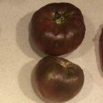 Tomato Dwarf Kookaburra Cackle (customer Ken)