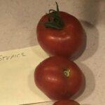 Tomato Stupice from customer Ken