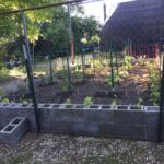 new garden just planted and fenced june 2020