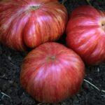 Tomato - Pink Jazz (Photo courtesy of Baker Creek)