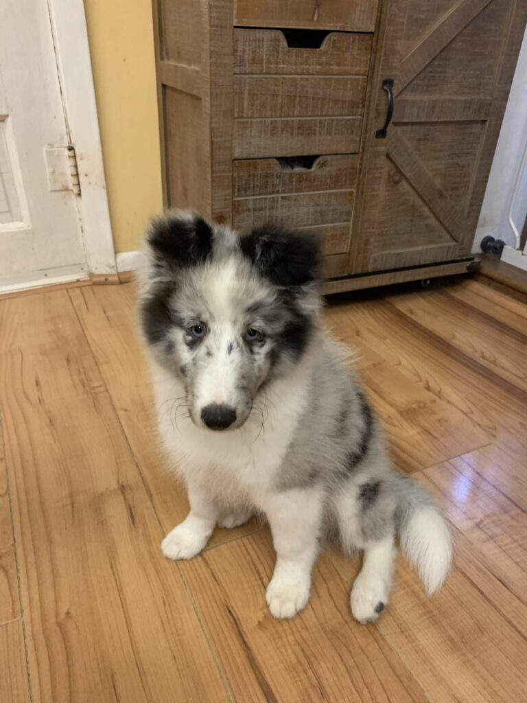 Jordie, Our newest member of the family