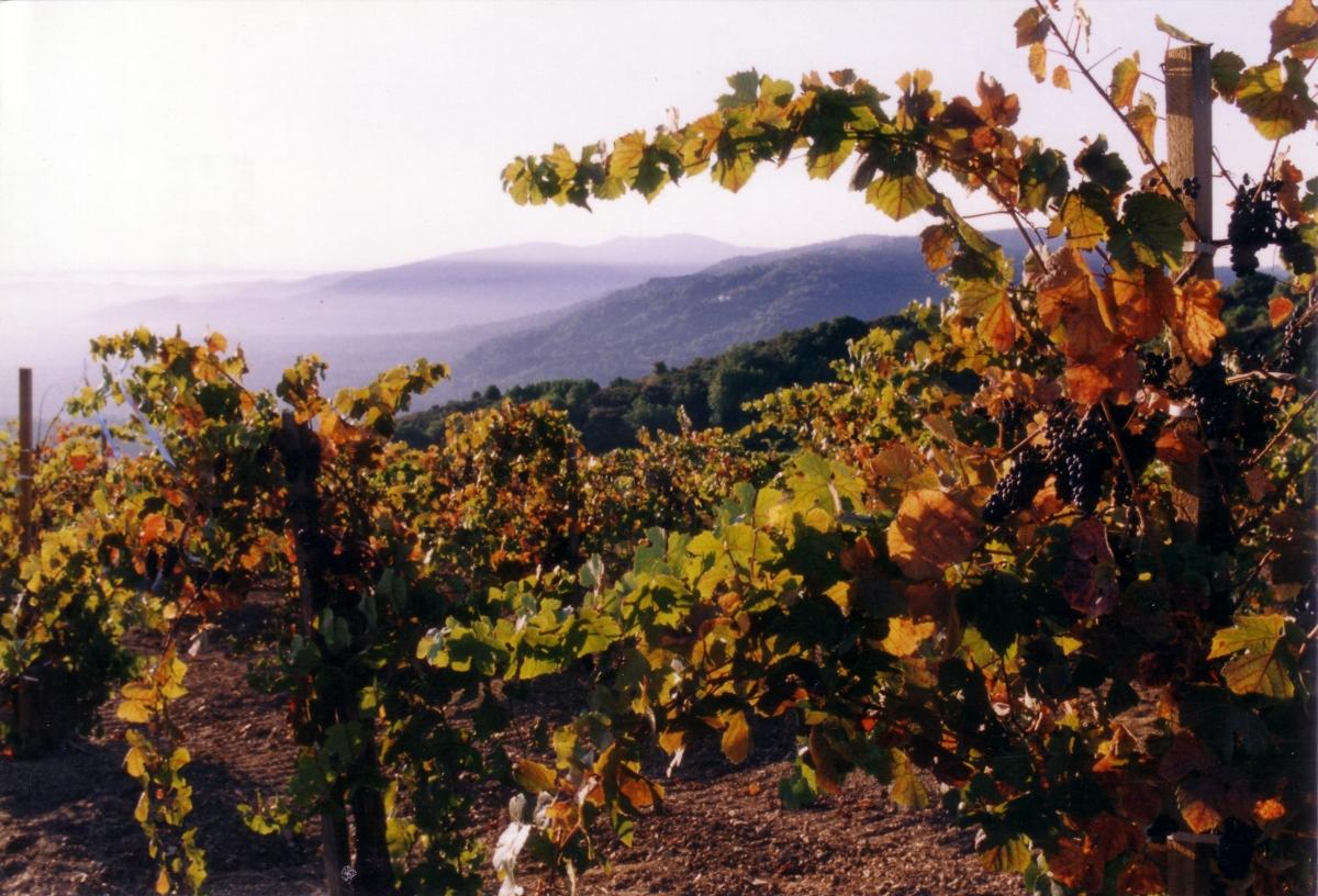 Martin Ray's Original Pinot Vineyard 1997