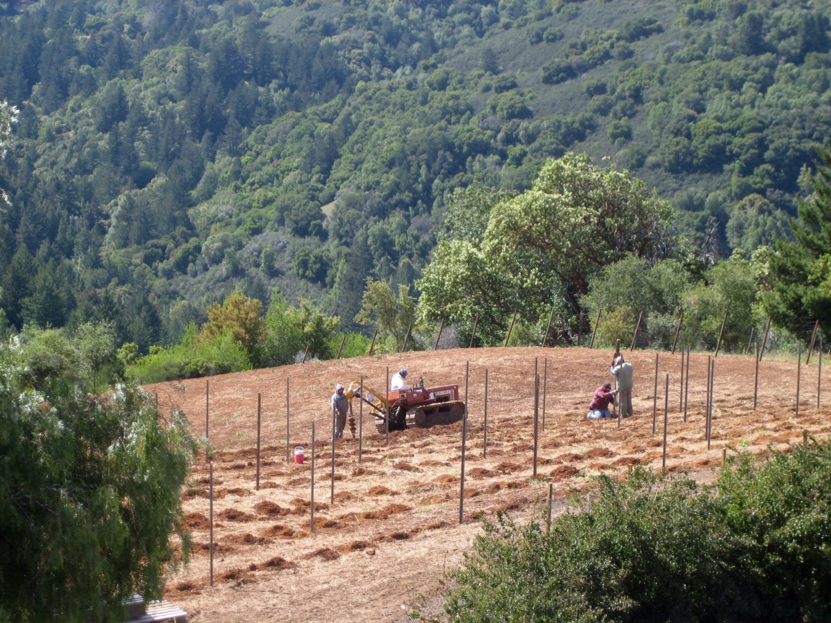 Laying out out a new vineyard site - Spring 2012