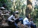mau_a_malwai_woods