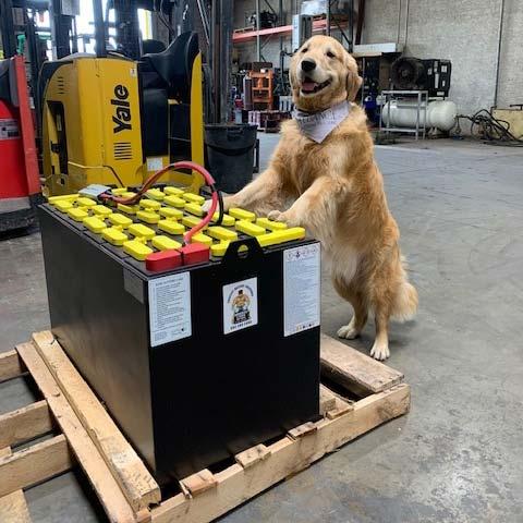Forklift Battery Maintenance