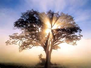 SOM 101 & Membership in Spiritual Community