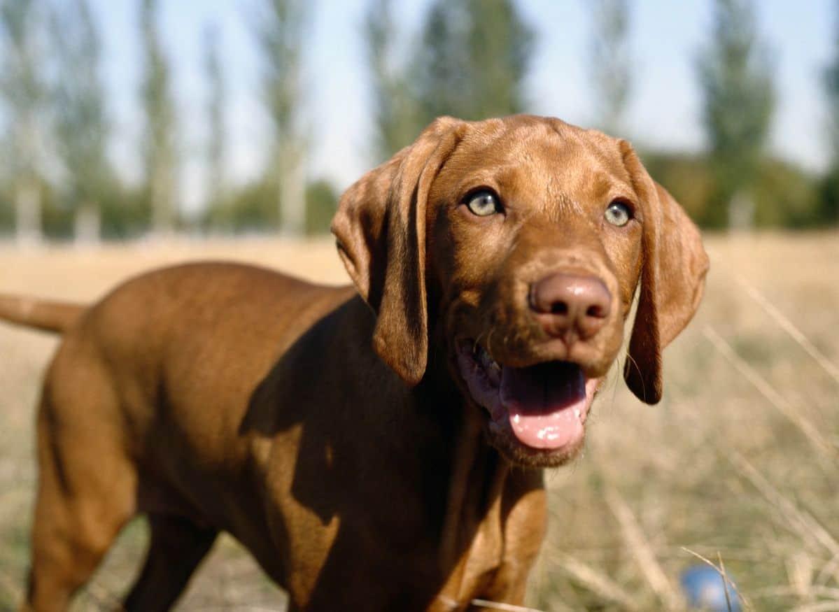 Puppy Training columbus ohio