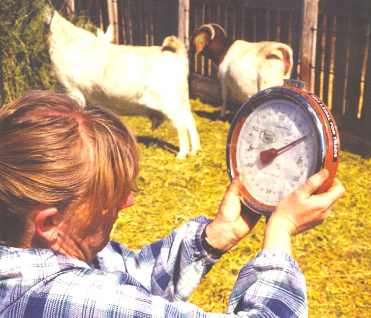 Inventing a Tribe: Reflections on the American Goat Federation AGM