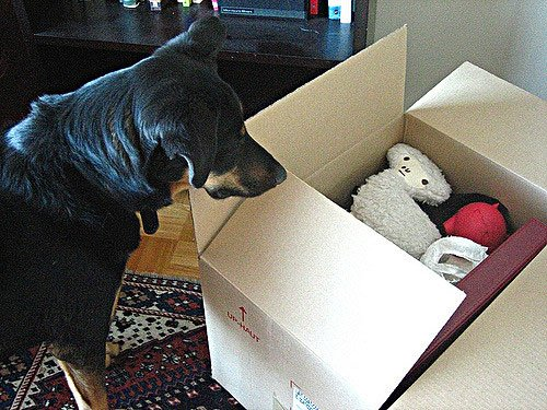 How to Pet-Proof Your New Home After You Moved