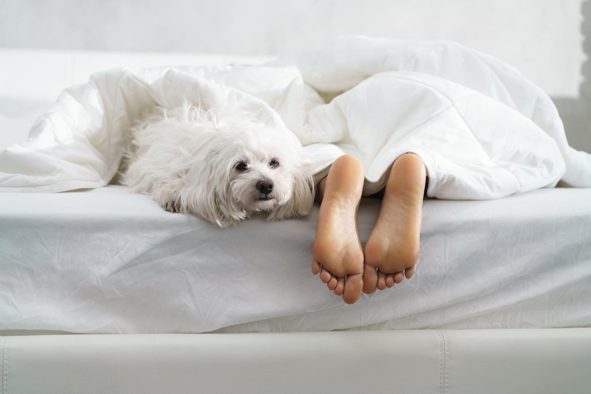 Bed Bug DIY rentable heaters