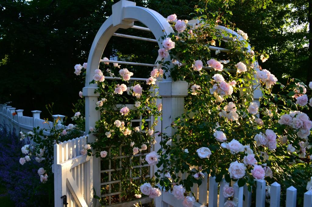 rosearbor