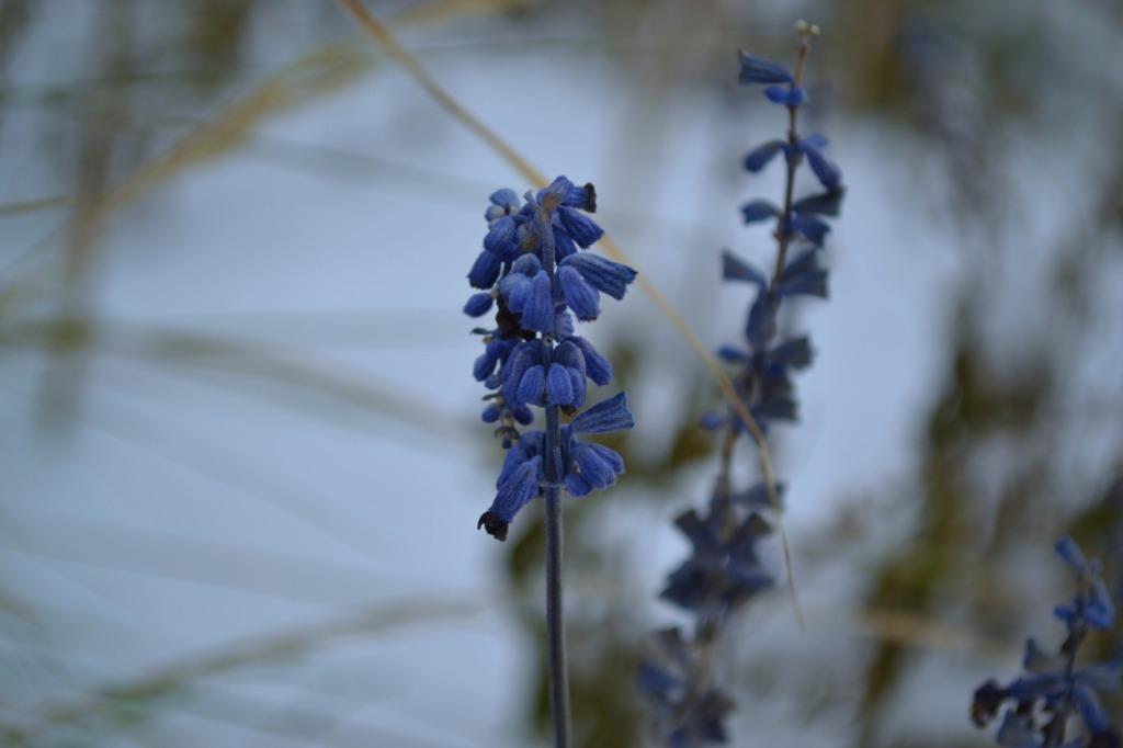 flowersinthesnow