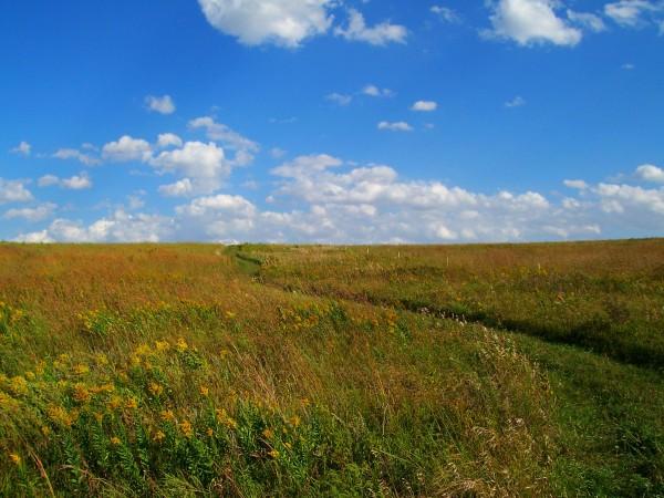 Grass Path Prairie edited