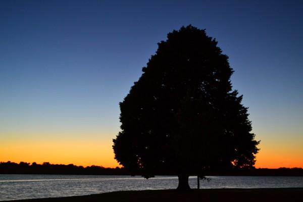 Holmes Lake Tree
