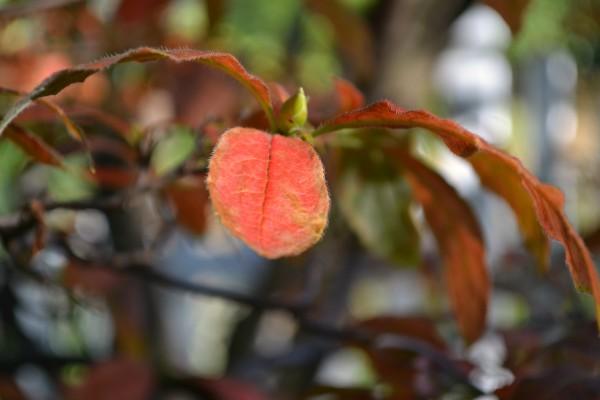 leaf and bud