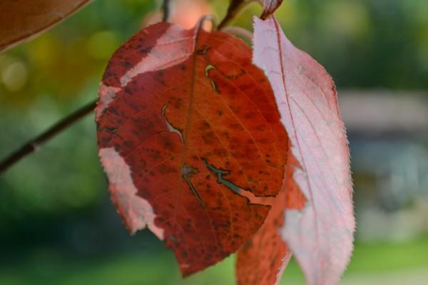 leaf with cracks