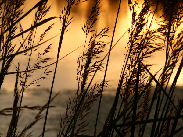 nebraska sunset grass