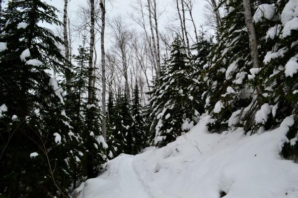 SnowyTrail