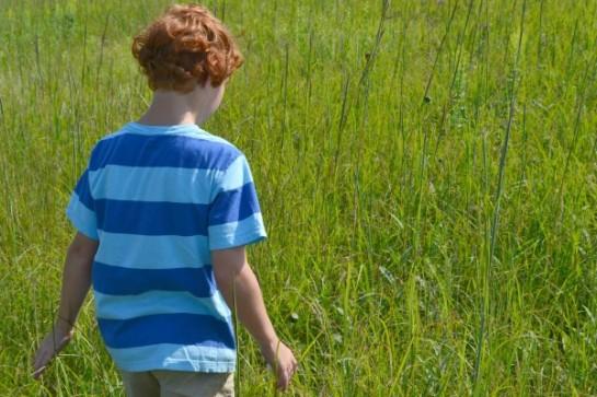 Rowan in grass