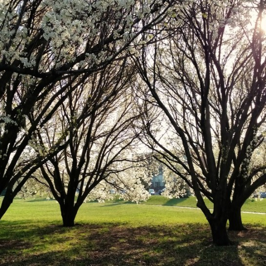 pear grove