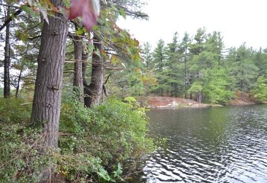 Camerons Lake Lot, Waterfront, Camerons Lake, Gurreathomes.com