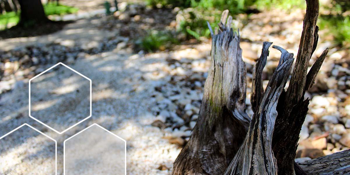 ghostwood-1