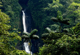 Eco-wonders are aboundant in Costa Rica and rainforest hiking trails and tours are found close to Playa Grande, Costa Rica
